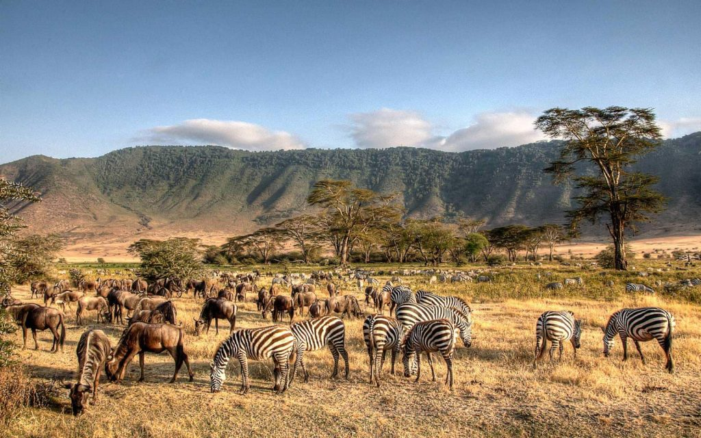 Overview of learning swahili - why learn it and how hard it is. This is the reason you learn Swahili: to go visit and go on safari!
