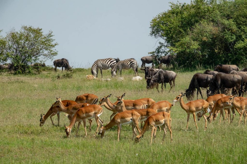 Safari animals in Swahili for talking about animals in Kenya and Tanzania