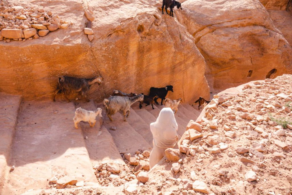 One of the walking trails in petra, with goats walking along it. this is me hiding from a stampede (not really) of goats!