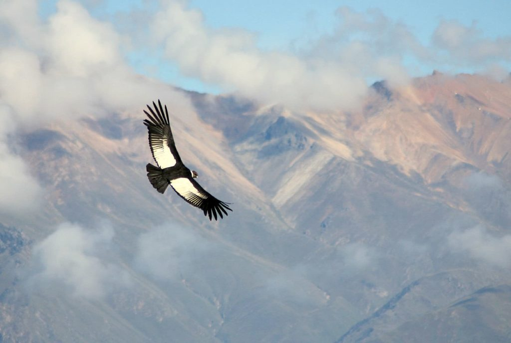 One thing Colombia is known for is its native flora and fauna - this is the Condor de los Andes flying above Tayrona.