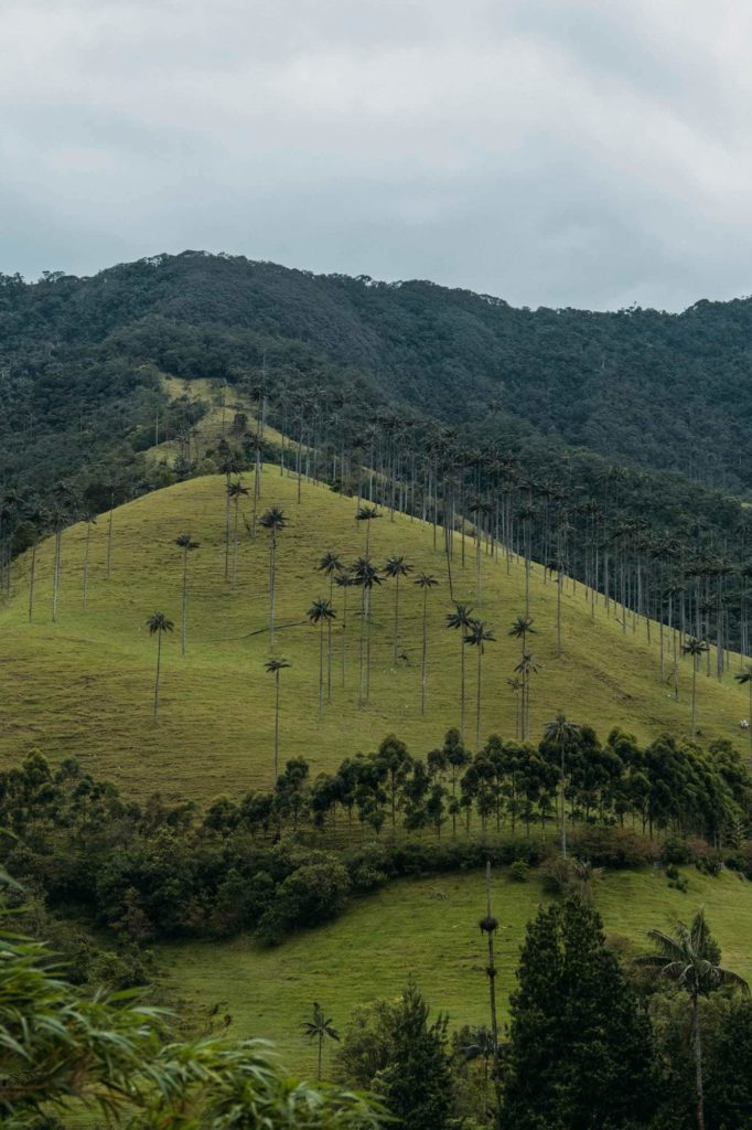 The Ultimate Valle de Cocora Hiking Guide 4