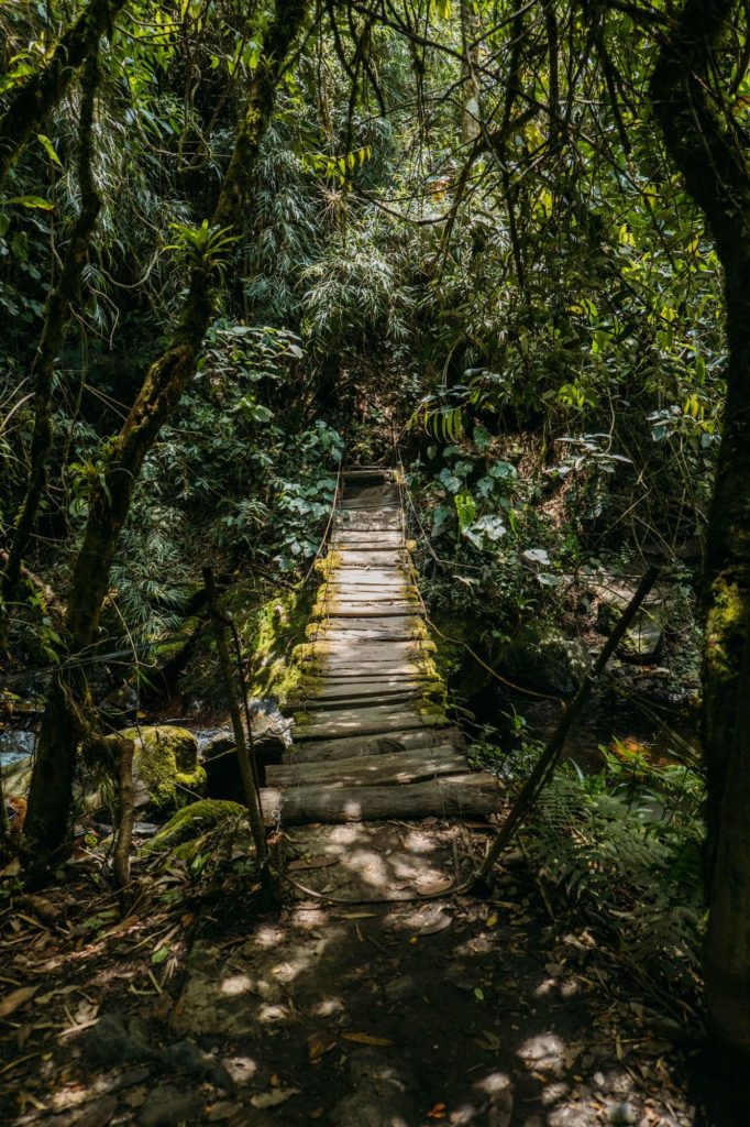 The Ultimate Valle de Cocora Hiking Guide 6