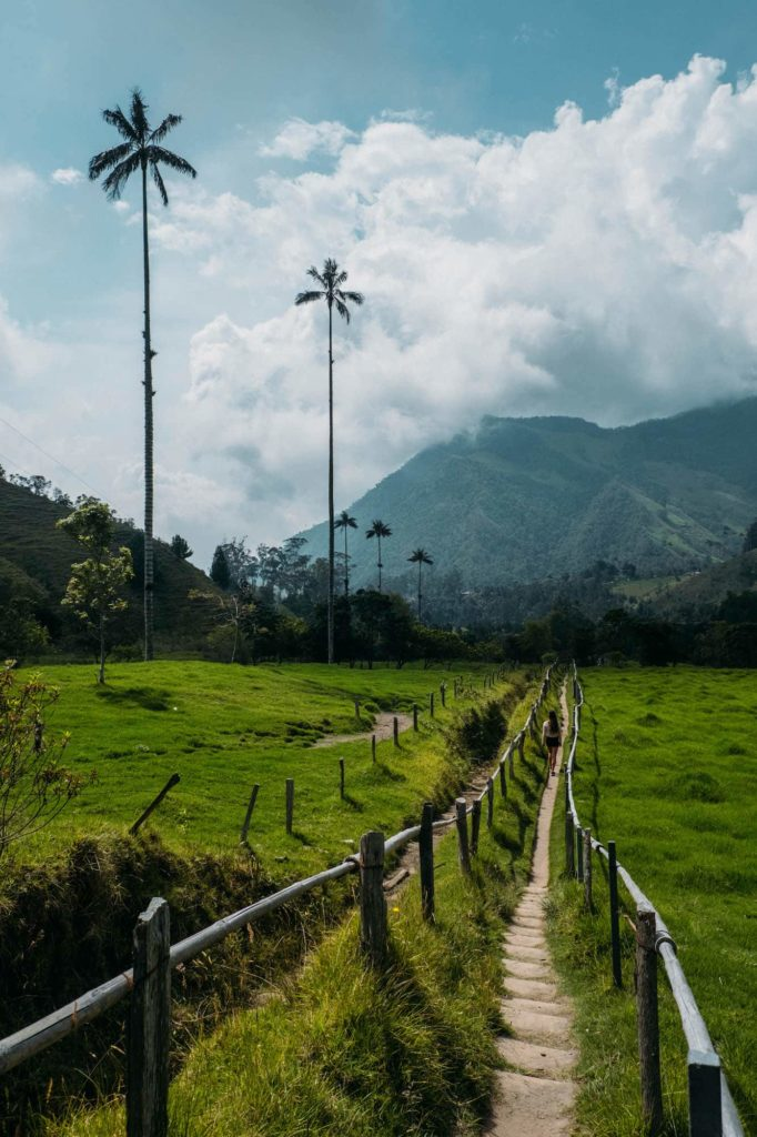 The Ultimate Valle de Cocora Hiking Guide 7