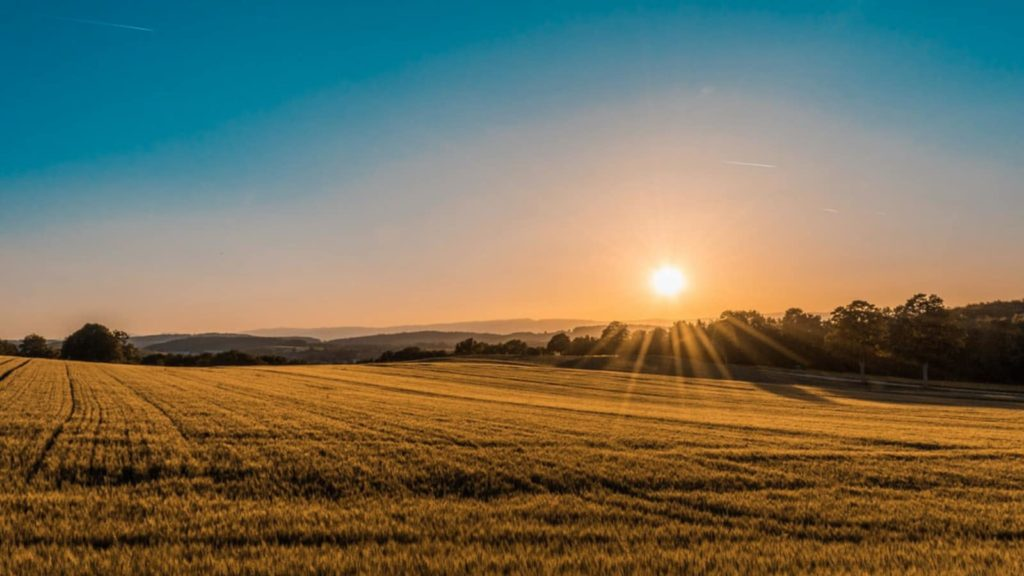 Sunrise over wheat field for Good Morning in French post