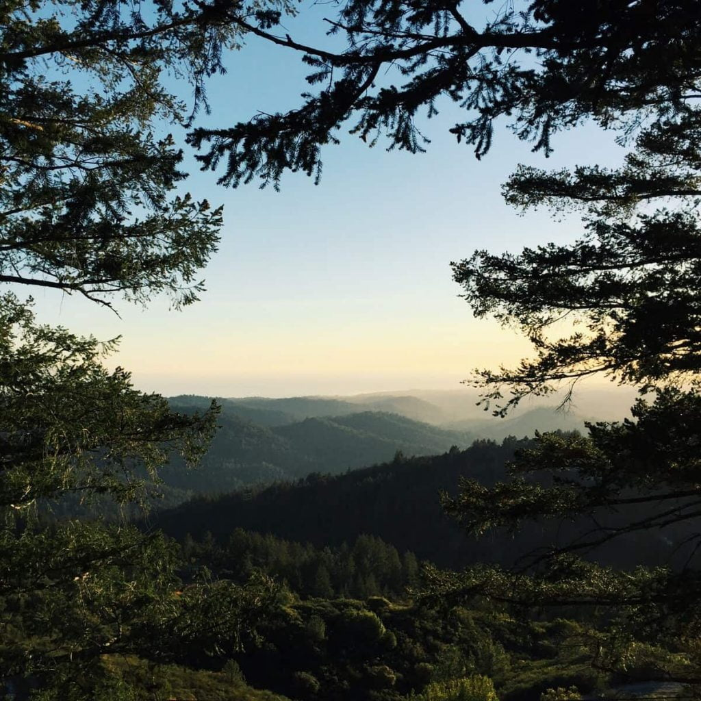Monterey Bay treehouse california