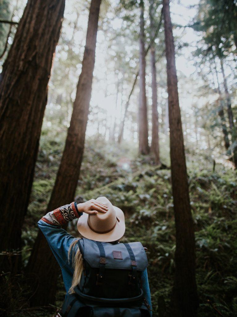 10 Amazing Treehouses in California